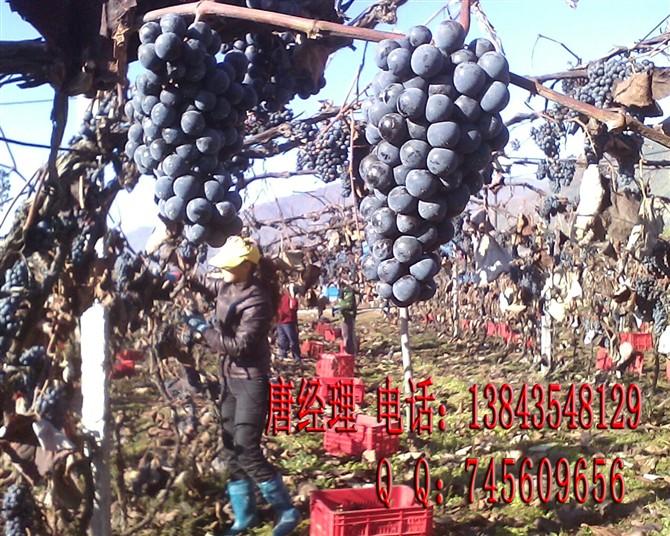 冰葡萄酒 冰红葡萄酒 北冰红葡萄酒