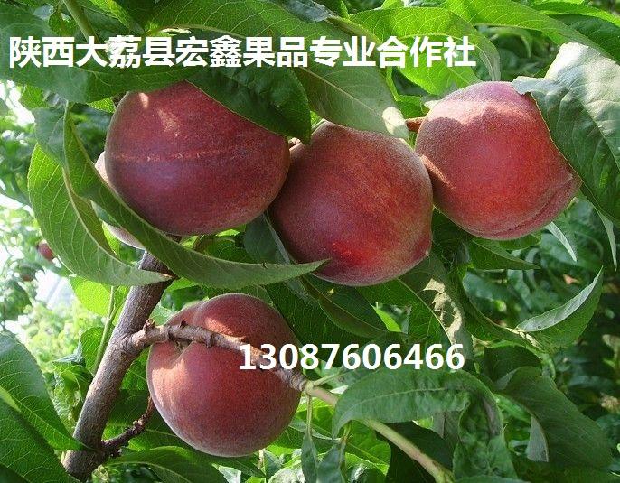 陕西早晚熟桃子